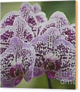 Orchids Pictures 11 Wood Print