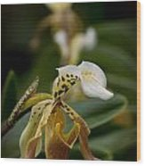 Orchids Pictures 28 Wood Print