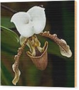 Orchids Pictures 31 Wood Print