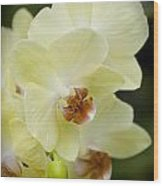 Orchids Pictures 34 Wood Print