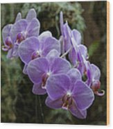 Orchids Square Format Img 5437 Wood Print