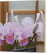 Orchids - Us Botanic Garden - 011315 Wood Print by DC Photographer