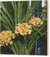 Orchids - Us Botanic Garden - 01137 Wood Print by DC Photographer