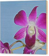 Orchids With Blue Sky Wood Print