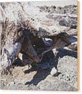 Oregon Beach - Driftwood Trunk Wood Print