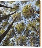 Oregon Forest Wood Print