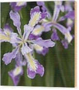 Oregon Irises In Bloom Closeup Wood Print