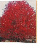 Oregon Red Maple Beauty Wood Print