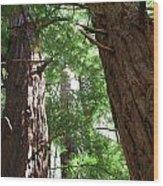 Threatened Oregon Sequioa Wood Print