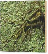 Oregon Tree Wood Print