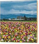 Oregon Tulip Farm - Willamette Valley Wood Print