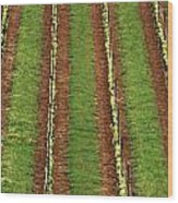 Oregon Vineyard Rows Panoramic Wood Print