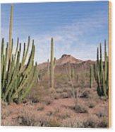Organ Pipe Cactus Natl Monument Wood Print