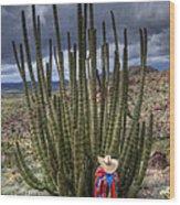 Organ Pipe Cactus The Visitor 1 Wood Print