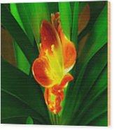 Organic Glowing Wood Print
