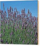 Organic Lavender Wood Print