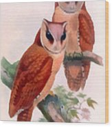 Oriental Bay Owl Wood Print