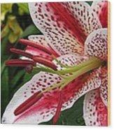 Oriental Hybrid Lily Named Dizzy Wood Print