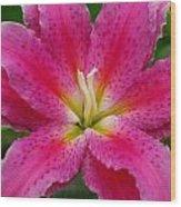 Oriental Lily Wood Print