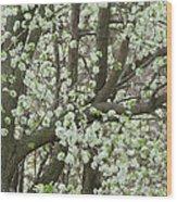 Oriental Pear Tree Wood Print