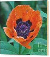 Oriental Poppy Flower Wood Print