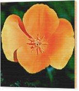 Original Digital Painting Of The California Poppy Wood Print