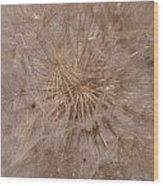 Original Puff Ball Wood Print