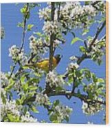 Oriole In A Pear Tree Wood Print
