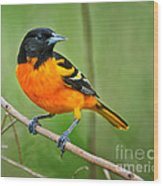 Oriole Perched Wood Print