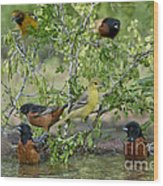 Orioles At The Pool Wood Print