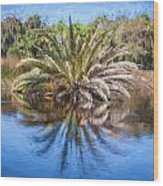 Ormond Scenic Loop Florida Palm Tree Painted  Wood Print