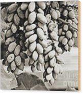 Ornamental Bush - Sepia Wood Print
