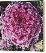 Ornamental Cabbage Plant Wood Print