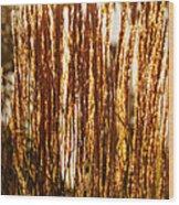 Ornamental Golden Grass Wood Print