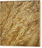 Ornamental Grass Wood Print
