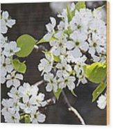 Ornamental Pear Blossoms No. 1 Wood Print