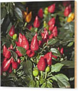 Ornamental Peppers Wood Print by Peter French