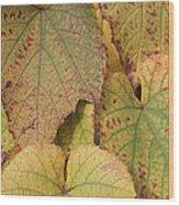 Ornamental Vine Wood Print