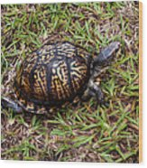 Box Turtle Wood Print