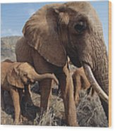 Orphans Malaika With Nyiro Tsavo Kenya Wood Print