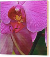 Orquideas Wood Print