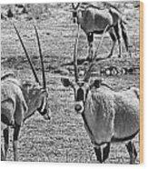 Oryx Black And White Wood Print