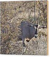 Oryx Long Horned Antelope Wood Print