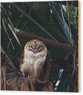 Oscar The Barn Owl Wood Print
