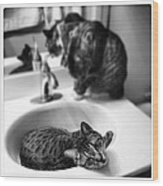 Oskar And Klaus At The Sink Wood Print by Mick Szydlowski