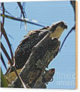 Osprey 2 Wood Print