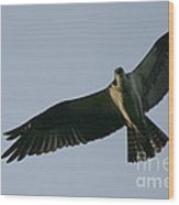 Osprey Above The Androscoggin Wood Print