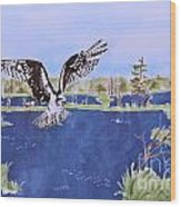 Osprey At Tuttle Marsh Wood Print