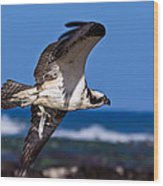Osprey Bringing Home The Bacon Wood Print