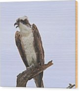 Osprey Call Wood Print